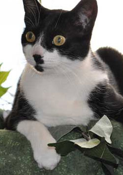 Benim Belalı Kedim - My Cat from Hell izle