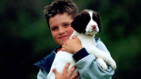 Mucize Köpekler - Miracle Dogs izle