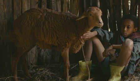 Kuzu - Lamb izle